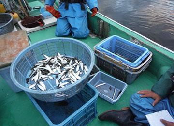 ます網魚類調査2